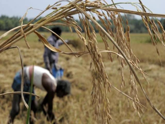 Farmer group: Govt's MSP not as promised - Lokmarg