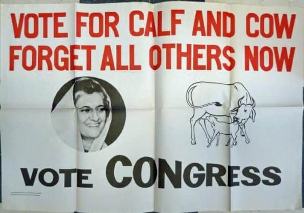 Vote For Calf And Cow